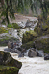 Elwha River Restoration,  Elwha Dam removal, river returning to original channel, March 16, 2012, Largest ram removal project in US history, Olympic National Park, Olympic Peninsula, Washington State, Pacific Northwest, USA, North America,