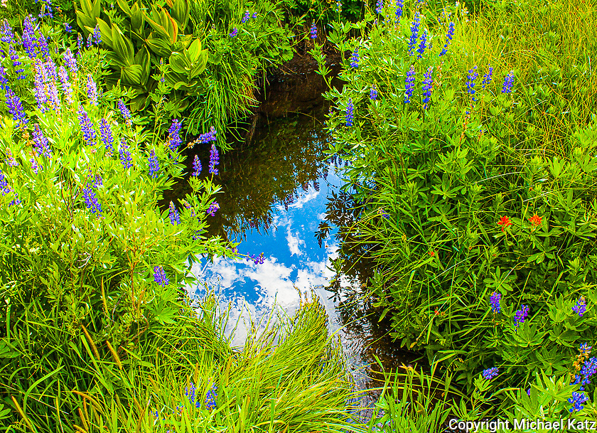 Wildflowers and Reflection, Agnew Meadows