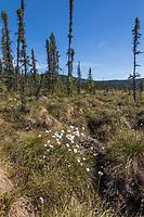 Tundra and tussocks along the Charley River, Yukon Charley Rivers National Preserve, Alaska