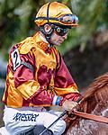 HALLANDALE BEACH, FL - Photo of Luca Panici taken December12, 2015 at Gulfstream Park in Hallandale Beach, FL. (Photo by Bob Aaron/Eclipse Sportswire/Getty Images)