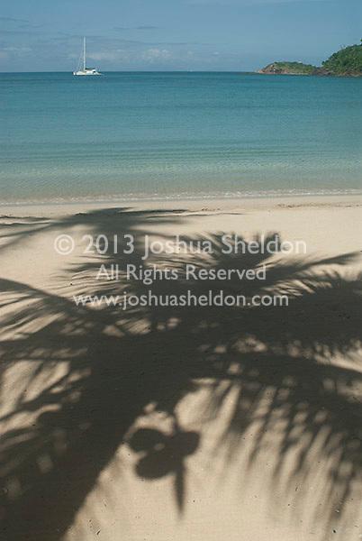 Shadow of palm tree on sandy beach