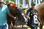 July 18, 2015: Rosalind is one of seven contenders in the Delaware Handicap. Sheer Drama, Joe Bravo up, wins the Grade I Delaware Handicap, one and 1/4 miles for fillies and mares 3 and upward at Delaware Park in Stanton DE.  Trainer is David Fawkes, owner is Harold L. Queen. Joan Fairman Kanes/ESW/CSM