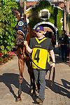 "DEL MAR, CA  AUGUST 24:  #4 Giant Expectations, ridden by Drayden Van Dyke, enters the paddock before the Pat O'Brien Stakes (Grade ll) ""Win and You're In Breeders' Cup Dirt Mile Division"" on August 23, 2019 at Del Mar Thoroughbred Club in Del Mar, CA.  ( Photo by Casey Phillips/Eclipse Sportswire/CSM)"