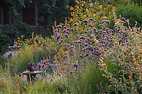 Perennial border with pollinator plants - Frey Garden. Mendocino, California. Sphaeralcea incana, Verbena bonariensis, Japanese sunflower (annual) - a late summer group of bee-friendly flowers.