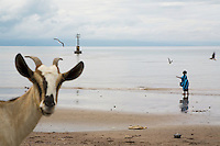 Djibouti. Tadjourah province. Tadjourah. Red sea on the gulf of Tadjourah. Low tide. A muslim woman on the beach, flying birds, a goat and a lighthouse.  © 2006 Didier Ruef