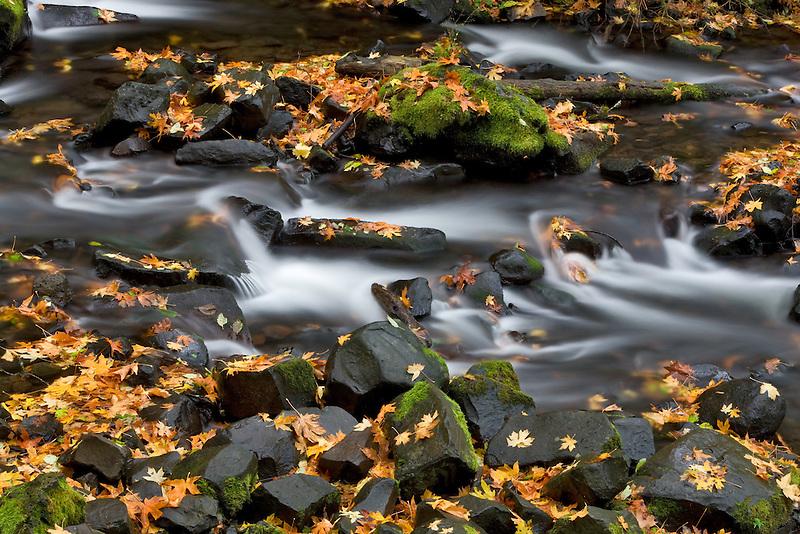 Fallen maple leaves in  Bridal Veil Creek.  Columbia River Gorge National Scenic Area. Oregon