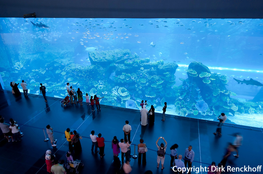 Aquarium in der Dubai Mall, Dubai, Vereinigte arabische Emirate (VAE, UAE)