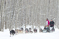 Gakona, Alaska's Zoya DeNure takes her team down a wooded section of trail at the 2012 Iditarod Ceremonial Start, Anchorage, AK.