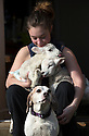 """21/04/15<br /> <br /> Melissa Ebbatson with the lambs and Draughtsman.<br /> <br /> Two 'sheep dogs' are helping to pamper three orphaned lambs who think the dogs are their mum.<br /> <br /> The three orphaned  lambs, who wear nappies so they can have the run-of-the-house, like to snuggle up to the dogs and share their bed with them in the kitchen by the stove.<br /> <br /> Piper, an 11-year-old rhodesian ridgeback-cross and Draughtsman, an eight-year-old ex-hunting beagle, take turns looking after the week-old lambs who often try to suckle from their doting canine 'parents'.<br /> <br /> Melissa Ebbatson, 21, said: """"These three were quite poorly, so we brought them inside so we could look after them better and give them a bit more warmth. We put them in nappies so they don't make a mess in the house.  One of the dogs was having a snooze on his bed and the lambs just jumped in and joined him. And they've all become inseparable since then.<br /> <br /> """"The dogs like to clean the lambs' faces after they've had their bottles. And they enjoying romping around the place with them,"""" said Melissa who helps to run Crossgates Farm, with her family near Tideswell in the Derbyshire Peak District.<br /> <br /> """"They seem to really care about them and go straight to them if they start bleating – they even come to find us if they think they're hungry.<br /> <br /> """"We change their nappies at least four-times-a-day - the baby boys even need to wear two!<br /> <br /> """"They are between seven and eight days old, and we hope to get them living back outside again when they are strong enough in another ten days or so – that's as long as the dogs let us!<br /> <br /> """"We're probably all a bit bonkers here but it all seems normal to us"""", she added.<br /> <br /> All Rights Reserved: F Stop Press Ltd. +44(0)1335 418629   www.fstoppress.com."""