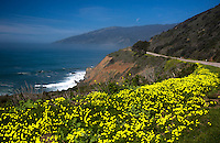 Wildflowers bloom along Pacific Coast Highway near Big Sur, California