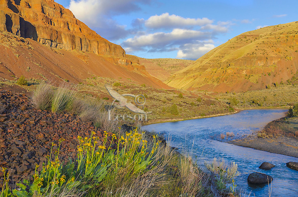 John Day River and balsamroot flowers about 1 1/2 to 2 miles upstream from 30 Mile Creek.  OR.