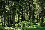 Deutschland, Thueringen, Thueringer Wald   Germany, Thuringia, Thuringian Forest