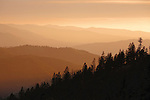 Sunset over the forested ridges of western Montana