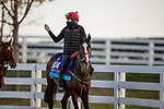 November 2, 2020: Cadillac, trained by trainer Mrs. John Harrington, exercises in preparation for the Breeders' Cup Juvenile Turf at  Keeneland Racetrack in Lexington, Kentucky on November 2, 2020. Alex Evers/Eclipse Sportswire/Breeders Cup