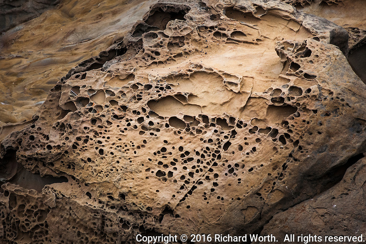 Tafoni formations in the sandstone shoreline at Bean Hollow State Beach - Nature's abstract art.