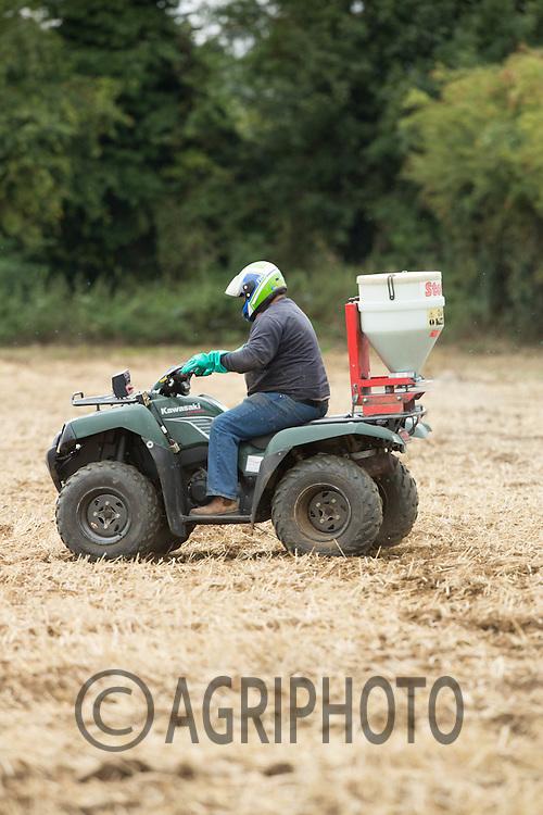 Slug pelleting with stocks applicator on the back of a quad bike <br /> ©Tim Scrivener Photographer 07850 303986<br /> ....Covering Agriculture In The UK....