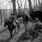 The Quantock Staghounds. A great deal of time is spent waiting while the huntsman tries to locate the quarrys scent. Quantock Hills, Somerset. ..Hunting with Hounds / Mansion Editions (isbn 0-9542233-1-4) copyright Homer Sykes. +44 (0) 20-8542-7083. < www.mansioneditions.com >.