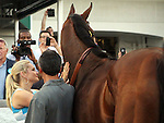 June 13, 2015 Triple Crown winner American Pharoah is paraded between races at Churchill Downs, where he won the Kentucky Derby this year. Also pictured is Jill Baffert. ©Mary M. Meek/ESW/CSM