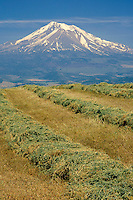 Hayfield near Gazelle<br />