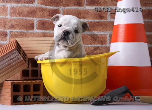Xavier, ANIMALS, dogs, photos(SPCHdogs416,#A#) Hunde, perros