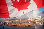 Pulp Mill, Canadian flag, Vancouver Island, pollution, Gold River, British Columbia, Canada, North America,