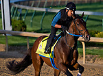 LOUISVILLE, KY - APRIL 28: Combatant, trained by Steve Asmussen, exercises in preparation for the Kentucky Derby at Churchill Downs on April 28, 2018 in Louisville, Kentucky. (Photo by Scott Serio/Eclipse Sportswire/Getty Images)