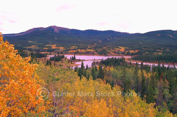 "Mixed Forest along Alaska Highway, near ""Jake's Corner"", Yukon Territory, YT, Canada - Klondike Region, Autumn / Fall"