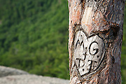Initials carved in tree at Cathedral Ledge State Park in Bartlett, New Hampshire.