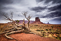 A dead juniper tree in Monument Valley with the East Mitten and several sandstone spires visible in the distance.