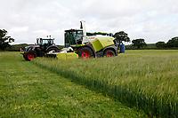 Photo: Richard Lane/Richard Lane Photography. Spring barley whole crop undersown with grass silage harvest near Wincanton, Somerset. 03/07/2020.