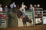SEBRA - Gordonsville, VA - 9.14.2013 - Bulls & Action