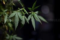 25.06.2020 - IoColtivo a Montecitorio - Demo For The Legalization of Cannabis At Italian Parliament