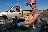 Johnna Bouker, from Dillingham, Alaska, rides a four-wheeler with her dog as her father, John Paul Bouker, looks on, in Ekuk, Alaska on July 4, 2019. 964 setnet permits were fished last year in Bristol Bay. Approximately 6o of those are fished on Ekuk, where fishing families set up seasonal camps.  (Photo by Karen Ducey)