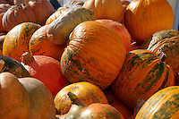 Fresh whole pumpkins