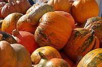 Fresh whole pumpkins