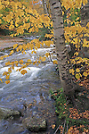 Bear River in the Fall, Grafton Notch State Park, Maine, USA