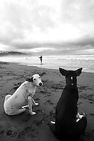 Dogs waiting for the afternoons catch, Jaque, Panama