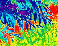 Aquatic vegetation in primary colors