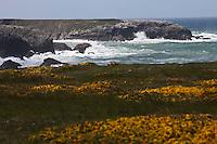 Europe/France/Bretagne/56/Morbihan/ Belle-Ile-en-Mer/Donnant: Port Donnant