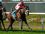 September 27, 2014: Stephanie's Kitten, ridden by John Velazquez, wins the Flower Bowl Stakes on Jockey Club Gold Cup Day at Belmont Park Race Track in Elmont, New York. John Voorhees/ESW/CSM