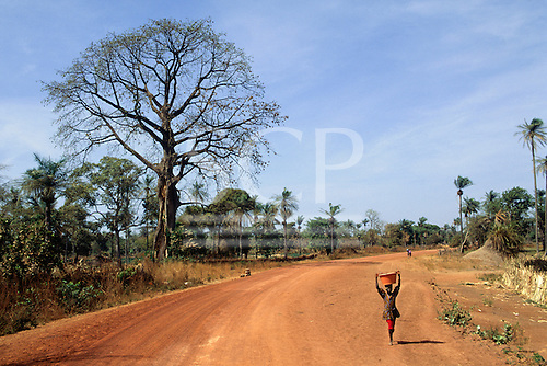 The Gambia. Girl with a red plastic bowl on her head walking along a red dirt road with a baobab (Adansonia digitata) tree.