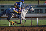 OCT 29 2014: L'Amour de Ma Vie, trained by Pia Brandt, exercises in preparation for the Breeders' Cup Distaff at Santa Anita Race Course in Arcadia, California on October 29, 2014. Kazushi Ishida/ESW/CSM