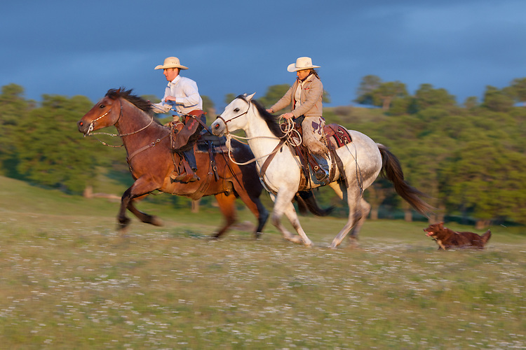 Pair of riders on horseback running through wildflowers with a dog
