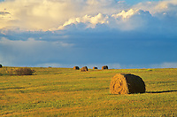 Hay bales in farm field with approaching storm, near Fort Totten, Benson County, North Dakota, AGPix_0284.