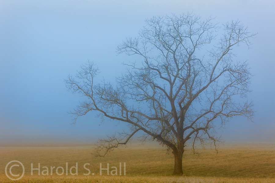 This is Cades Cove in the Great Smoky Mountains National Park, Tennessee.  Fog is a common sight in this neck of the woods.