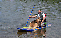 Ardingly, ENGLAND. 25.05.2020<br /> .<br /> A paddle boarder and his dog enjoy the sun during the bank holiday Monday Covid-19 lockdown with government guidelines to social distance  at Ardingly Reservoir, Ardingly, West Sussex, England at  on 25 May 2020. Photo by Alan Stanford.