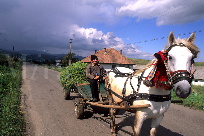 Man on horse drawn wagon with crops in Romania