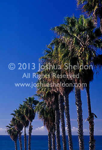 Row of palm trees along road leading to Pacific ocean<br />
