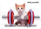 Xavier, ANIMALS, REALISTISCHE TIERE, ANIMALES REALISTICOS, cats, photos+++++,SPCHCATS890,#a#, EVERYDAY