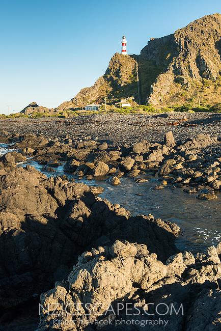 Morning at Cape Palliser with lighthouse, Palliser Bay, Wellington Region, North Island, New Zealand, NZ